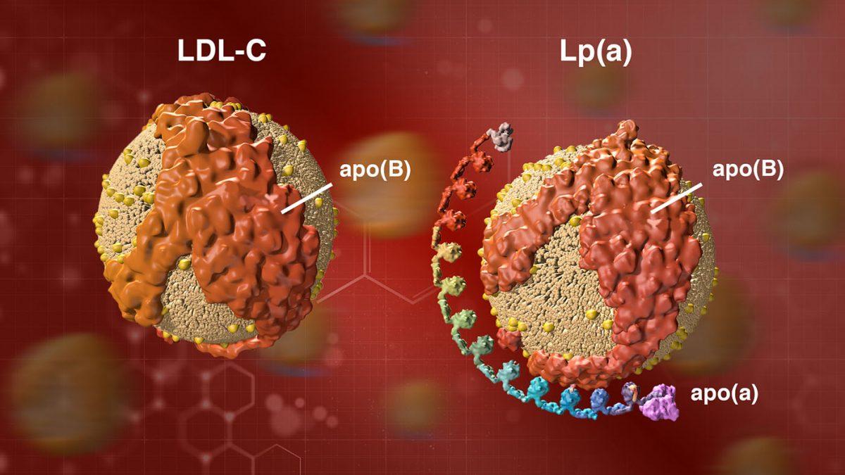 O que é a Lipoproteína (a)?