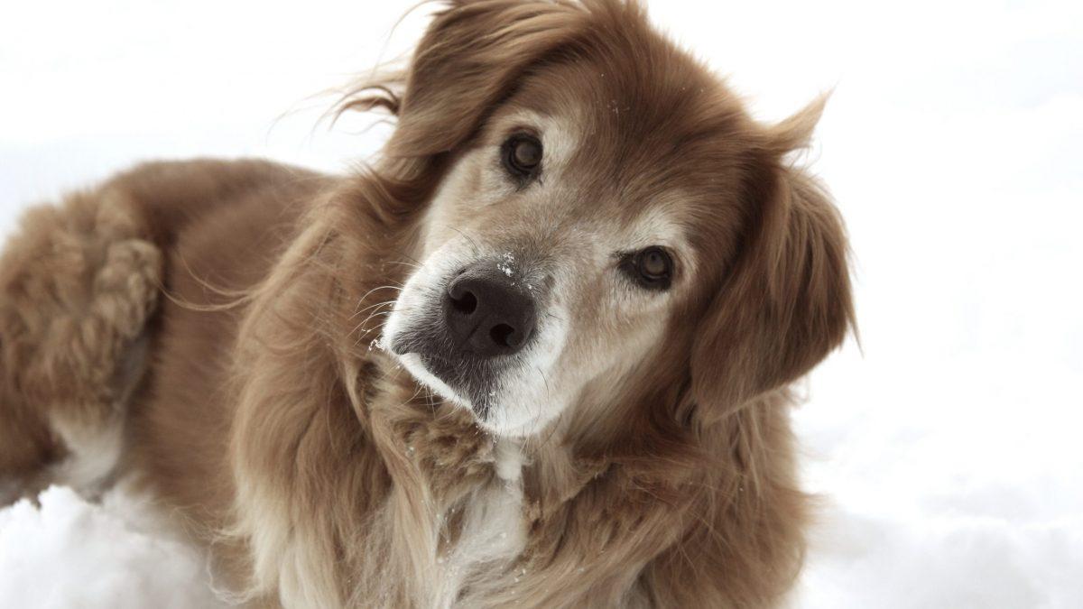 Possuir um cão diminui risco o cardiovascular, dizem estudos